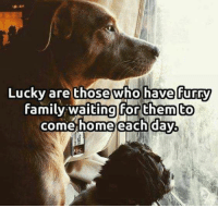Download Love Me Love My Dog album for free on Google Play  Link : http://bit.ly/LMLMD-APP: Lucky are those who have furry  family waiting for them to  come home each day Download Love Me Love My Dog album for free on Google Play  Link : http://bit.ly/LMLMD-APP