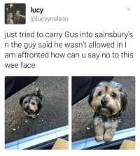 Memes, 🤖, and Human Being: lucy  alucyynelson  just tried to carry Gus into sainsbury's  n the guy said he wasn't allowed in  am affronted how can u say no to this  wee face Who was that horrible human being? | For more @aranjevi