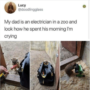Crying, Dad, and Dank: Lucy  @doodlingglass  My dad is an electrician in a zoo and  look how he spent his morning I'm  crying