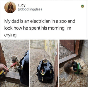 Crying, Dad, and Lucy: Lucy  @doodlingglass  My dad is an electrician in a zoo and  look how he spent his morning l'm  crying