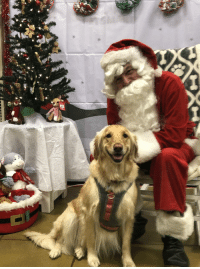 Happy, Lucy, and Santa: Lucy just met Santa. She is one happy pup