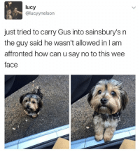 Wee, Lucy, and British: lucy  @lucyynelson  just tried to carry Gus into sainsbury's n  the guy said he wasn't allowed in l am  affronted how can u say no to this wee  face @studentproblems is my favourite acc on IG 😂