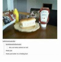 omg so in luv with @spunky rn 😍: ludicrouscupcake:  roir  forth  this cat looks stoked as hell  thats just  thats just butter in a hotdog bun  HEIN? omg so in luv with @spunky rn 😍