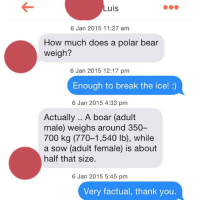 We get it, Luis. You know the metric system.: Luis  6 Jan 2015 11:27 am  How much does a polar bear  weigh?  6 Jan 2015 12:17 pm  Enough to break the ice!  6 Jan 2015 4:33 pm  Actually.. A boar (adult  male) weighs around 350-  700 kg (770-1,540 lb), while  a sow (adult female) is about  half that size.  6 Jan 2015 5:45 pm  Very factual, thank you. We get it, Luis. You know the metric system.