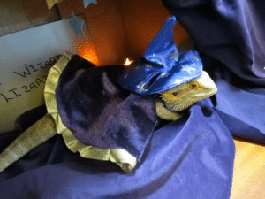 Love, Tumblr, and I Love You: lukia26: patterns-in-static:  iguanamouth:     an-eighth-of-faith submitted:  My aunt's wizard lizard. You know what to do. (P.s. I love you very much)   YOU KNOW WHAT TO DO  …you know what to do.