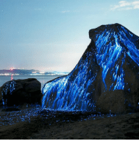 Memes, Heat, and Nature: Luminescence occurs when an object emits lights without emitting heat. This can occur as a result of chemical, electrical, or subatomic reactions. Bioluminescence, pictured here, is the result of a biochemical reaction within a living organism. luminescence light nature