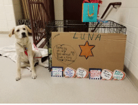 Lung ycu  BAD  DoGu  LUNA This young gal may not be the lead role in Annie, but she's been stealing the show! Here she is with all her fanmail.
