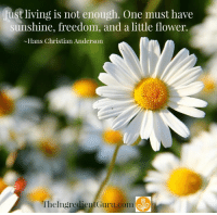 <3 Mira Dessy NE: lust living is not enough. One must have  sunshine, freedom, and a little flower.  ~Hans Christian Anderson  TheIngredientGuru.com <3 Mira Dessy NE