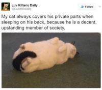 private parts: Luv Kittens Daily  Follow  @LuvkittensDaily  My cat always covers his private parts when  sleeping on his back, because he is a decent,  upstanding member of society.