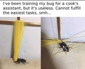 Dank, Memes, and Smh: l've been training my bug for a cook's  assistant, but it's useless. Cannot fulfill  the easiest tasks, smh.. Sometimes doing your best is not quite enough by VangeeOP MORE MEMES