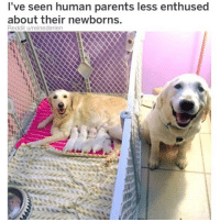 Meme, Memes, and Parents: l've seen human parents less enthused  about their newborns.  Reddit u/reinederien (@dogsbeingbasic) is a hecking wonderful dog meme page.