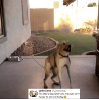 Memes, Good, and Happy: Lydia Dana @LydiaDana3  I'm Max's dog sitter and max was very  happy to see me today Post 1280: y the hell arent u following @kalesaladanimals for more good@boys every day