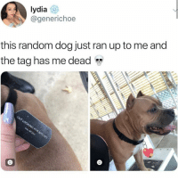Instagram, Memes, and Wtf: lydia  @generichoe  this random dog just ran up to me and  the tag has me dead instagram wont let me like posts wtf insta
