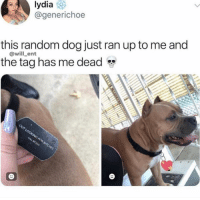 Memes, 🤖, and Dog: lydia  @generichoe  this random dog just ran up to me and  the tag has me dead  @will_ent Legendary