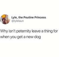 Home, Princess, and Girl Memes: Lyle, the Poutine Princess  @lylelaun  Why isn't peternity leave a thing for  when you get a new dog Ready to be a stay at home dog mom