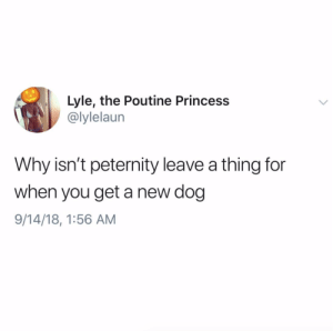 Princess, Time, and All The: Lyle, the Poutine Princess  @lylelaur  Why isn't peternity leave a thing for  when you get a new dog  9/14/18, 1:56 AM Can I go on peternity leave even though I've had my dog for 7 years? He needs cuddles all the time!Tw: @lylelaun