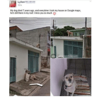 Google, Memes, and My House: Lyllon  18 h  My dog died 7 years ago, and everytime i look my house on Google maps,  he's still there in my roof. I miss you so much 😭😭😭😭😭