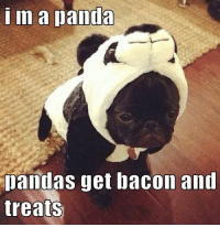 Cute, Funny, and Puppies: m a panda  Dandas get bacon and  treats I Has A Hotdog - Page 4 - Loldogs n Cute Puppies - funny dog pictures - Cheezburger