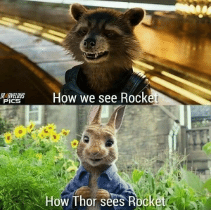 This always cracks me up: M  How we see Rocket  HARVELDUS  PICS  How Thor sees Rocketo This always cracks me up