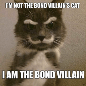 51 Funny Pictures That Will Definitely Make You Laugh - Page 2 of 4 - JustViral.Net: M NOT THE BOND VILLAIN'S CAT  IAM THE BOND VILLAIN 51 Funny Pictures That Will Definitely Make You Laugh - Page 2 of 4 - JustViral.Net
