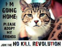 M  S  GOING  HOME!  PLEASE  ADOPT  MY  FRIENDS  JOIN THE NO KILL REVOLUTION I'M GOING HOME! PLEASE ADOPT MY FRIENDS!  JOIN THE NO KILL REVOLUTION  The 5th point of the No Kill Equation is Comprehensive Adoption Programs. We can adopt ourselves out of killing. Learn more...http://bit.ly/13EOPQU