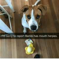 Bambi, Birthday, and Family: 'm sorry to report Bambi has mouth herpes. OKAY OKAY OKAY SO MY BROTHER'S FRIENDS BOUGHT HIM A MASSIVE HERPES PLUSH TOY FOR HIS BIRTHDAY AND TODAY BAMBI FOUND IT AND MY MOTHER SENT OUR FAMILY GROUP CHAT THIS PHOTO AND I CAN'T SHE LOOKS SO GUILTY FOR SPREADING THE HERPES ~ KAY