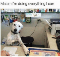 Can, Everything, and Maam: Ma'am I'm doing everything I can
