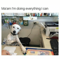 @hilarious.ted is my favourite page about animal memes! (@vodkalana): Ma'am I'm doing everything l can @hilarious.ted is my favourite page about animal memes! (@vodkalana)