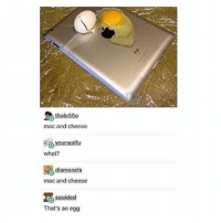 Tumblr, Old, and Mac: mac and cheese  younwaifu  what?  mac and cheese  guided  That's an egg this post is so old