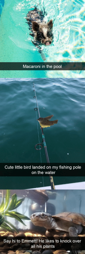 animalsnaps:Animal snaps: Macaroni in the pool   Cute little bird landed on my fishing pole  on the water   Say hi to Emmett! He likes to Knock over  all his plants animalsnaps:Animal snaps