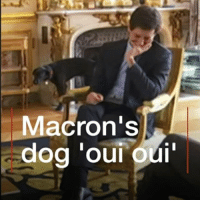 "Memes, Weed, and Cross: Macron's French President Emmanuel Macron's pet Nemo might be in the doghouse after this cheeky moment. The Labrador-Griffon cross interrupted a meeting with junior ministers when he weed on a fireplace at the Elysée palace. Macron said it was ""completely unusual"" for rescue dog Nemo to be so naughty. dog macron pet rescuedog fun"