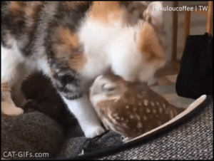 Macrophagic MRSA bacterium often look indistinguishable from tiny adorable owls. The only way to know for sure is to have a calico cat taste it.: Macrophagic MRSA bacterium often look indistinguishable from tiny adorable owls. The only way to know for sure is to have a calico cat taste it.