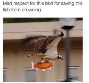 Dank, Memes, and Respect: Mad respect for this bird for saving this  fish from drowning Respect for this bird by EleclCtriC MORE MEMES
