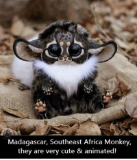 cute anime: Madagascar, Southeast Africa Monkey,  they are very cute & animated!