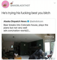 Bitch, Fucking, and Funny: @MADBLACKTHOT  He's trying his fucking best you bitch  Alaska Dispatch News@adndotcom  Bear breaks into Colorado house, plays the  piano but not very well  adn.com/nation-world/2...  canary How dare you judge him https://t.co/6rfYSYFdAd