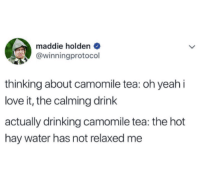Drinking, Love, and Yeah: maddie holden  @winningprotocol  thinking about camomile tea: oh yeah i  love it, the calming drink  actually drinking camomile tea: the hot  hay water has not relaxed me