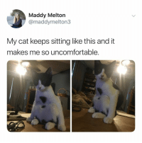 Cats, Relatable, and Cat: Maddy Melton  @maddymelton3  My cat keeps sitting like this and it  makes me so uncomfortable. why are cats the way they are??