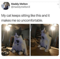 Maddy: Maddy Melton  @maddymelton3  My cat keeps sitting like this and it  makes me so uncomfortable.