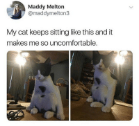 He is waiting for a snack: Maddy Melton  @maddymelton3  My cat keeps sitting like this and it  makes me so uncomfortable He is waiting for a snack