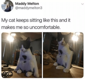 Cat, This, and Like: Maddy Melton  @maddymelton3  My cat keeps sitting like this and it  makes me so uncomfortable. e v o l u t i o n