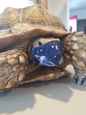Made a face mask for our tortoise!: Made a face mask for our tortoise!