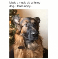 Bane, Love, and Memes: Made a music vid with my  dog. Please enjoy.. I love everything about this 😍 Credit: @grizzly.bane