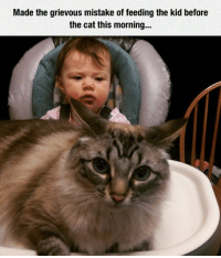 Never, Cat, and Kid: Made the grievous mistake of feeding the kid before  the cat this morning.. You'll Never Make That Mistake Again