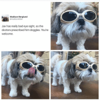 Doggie glasses could b the cutest thing I've ever seen and you should all be thankful I shared it blessed (@drsmashlove): Madison Berglund  @madisonkilian  Jax has really bad eye sight, so the  doctors prescribed him doggles. You're  welcome. Doggie glasses could b the cutest thing I've ever seen and you should all be thankful I shared it blessed (@drsmashlove)