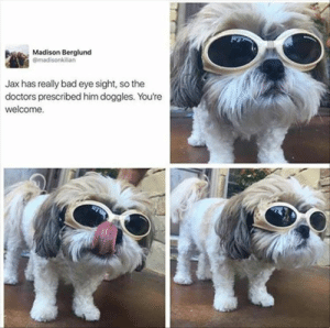 Animals, Bad, and Funny: Madison Berglund  @madisonkilian  Jax has really bad eye sight, so the  doctors prescribed him doggles. You're  welcome. 42 Funny Dog Memes That'll Make Your Day! - Lovely Animals World