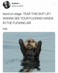 Fucking, Shit, and Dank Memes: maeve*  @bbiss666  band on stage: TEAR THIS SHIT UP  WANNA SEE YOUR FUCKING HANDS  IN THE FUCKING AIR  me 😭😭