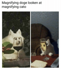 Doge, Memes, and Cato: Magnifying doge looken at  magnifying cato Staring competition. | Follow @aranjevi for more!