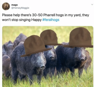 Wont Stop: mags  @HerseyMaggie  Please help there's 30-50 Pharrell hogs in my yard, they  won't stop singing Happy