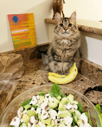 Weird, Yo, and Bananas: Mah, I ain't tryna eat yo weird salad. I protectin yo bananas !