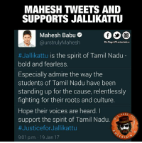 Memes, Admirable, and Bold: MAHESH THEETS AND  SUPPORTS JALLIKATTU  Mahesh Babu  urstrulyMahesh  Dis Page vil entertain u  #Jallikattu is the spirit of Tamil Nadu  bold and fearless.  Especially admire the way the  students of Tamil Nadu have been  standing up for the cause, relentlessly  fighting for their roots and culture.  I  Hope their voices are heard.  PAGE  support the spirit of Tamil Nadu.  #Justice for Jallikattu  RTA  9:01 p.m. 19 Jan 17